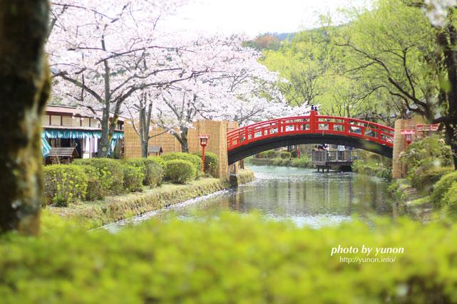 桜が満開な様子