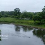 湿原の画像