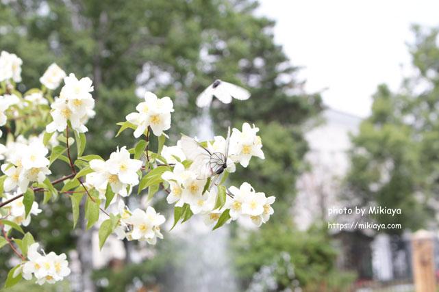 花盛りの画像